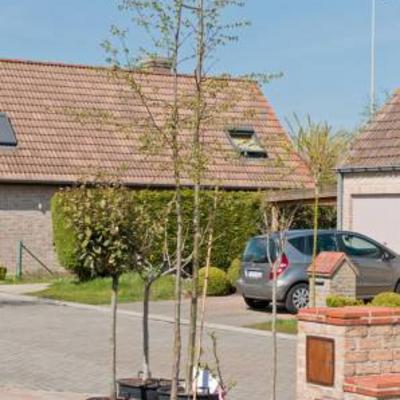 Herinrichting tuin planten en bomen te koop