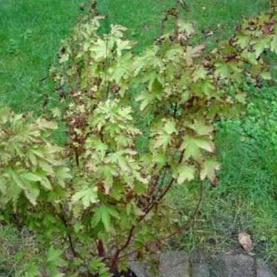 Plant kleurt bruin wat moet ik doen