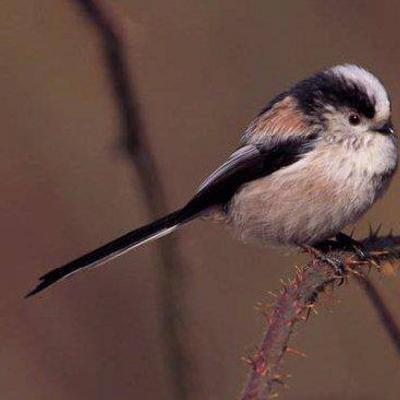 Iemand een idee welke vogel dit is