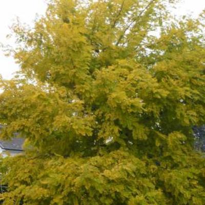 Juiste naam van deze boom