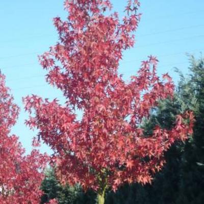 Naam van deze boom