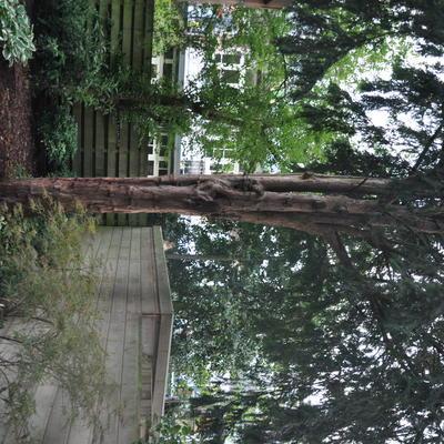 Vogelhuisje aan boom met spijker
