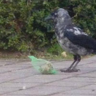 Welke vogel is dit