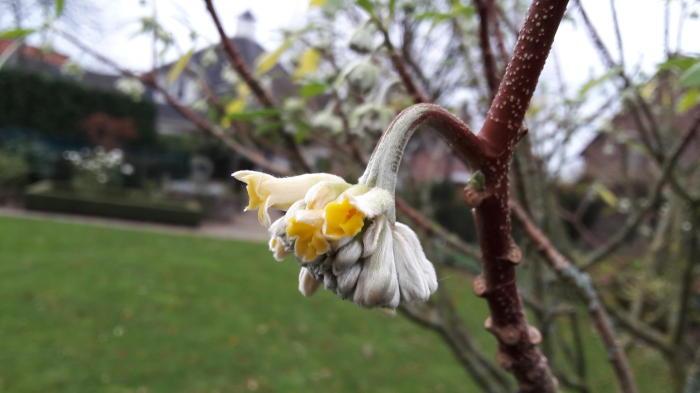 Foto uit de tuin van wiels - Bijzonder tuinfoto ...
