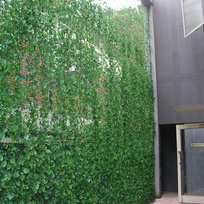 Klimplant voor betonijzers/ijzernetten