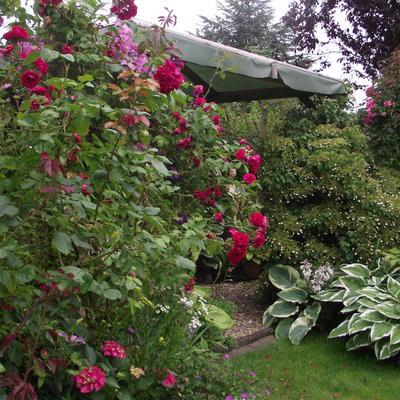 De wase open tuinen pinksteren