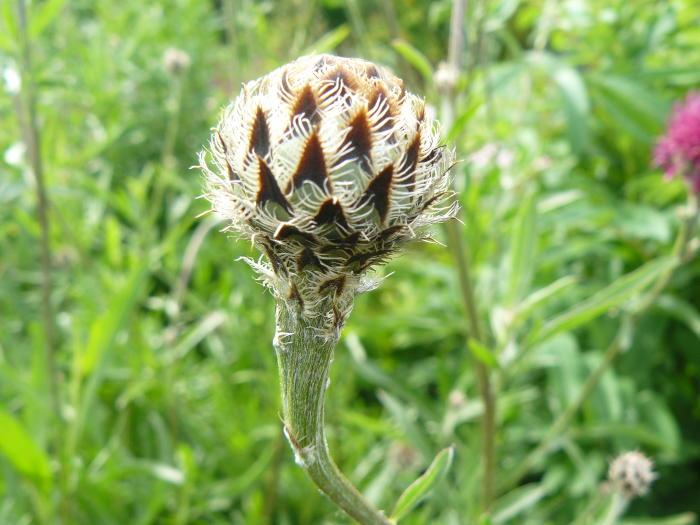 Foto uit de tuin van rosetteb - Bijzonder tuinfoto ...