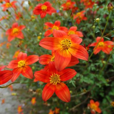 Wie kan mij helpen met de naam van de bloem