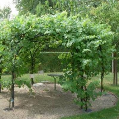 Bladhoudende pergola begroeiing tuinadvies - Pergola klimplant ...