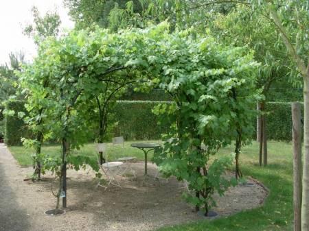 Groene pergola - Pergola klimplant ...