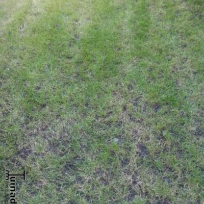 Hoe herstel ik mijn gras