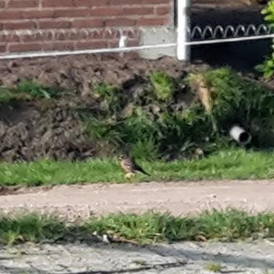 Vreemde vogel, weet iemand het?
