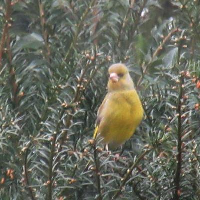 Alweer een bijzonder vogeltje, wat is het?