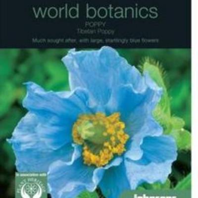 Meconopsis betonicifolia-blauwe papaver