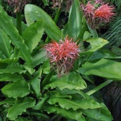 Naam van een plant