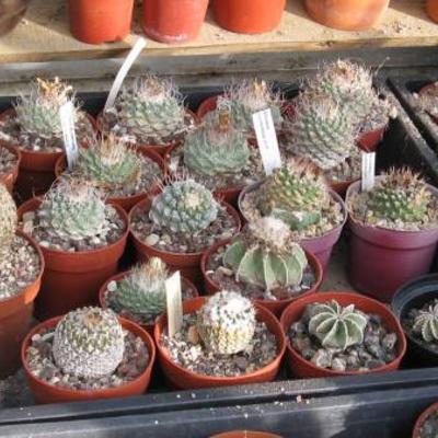 Verkoop verzameling van Abdel Cactus