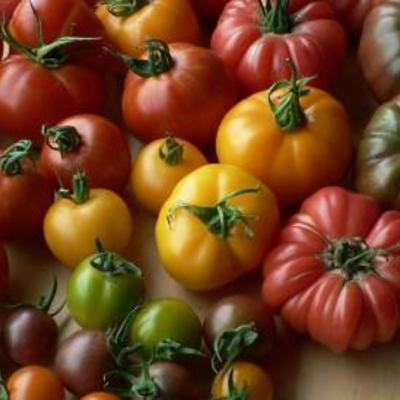 Tomatenplanten oude en speciale rassen