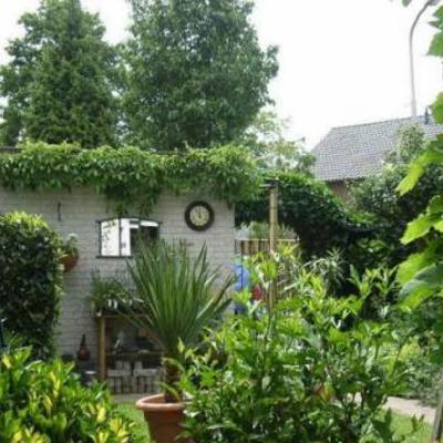 Snelgroeiende klimplanten voor betonnen muur aan schaduwkant