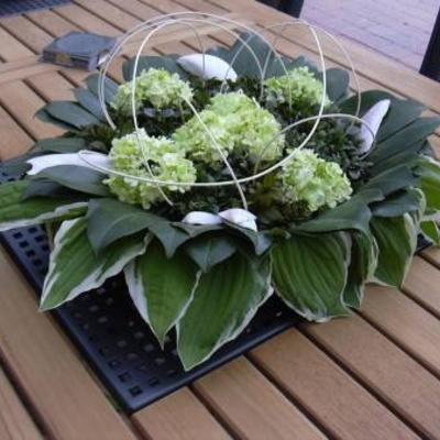 Verzorging azalea buiten
