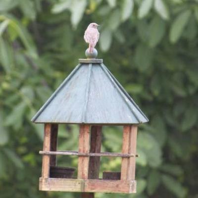 Vogels de tuin in lokken