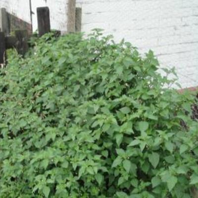 Hoe snel groeien buikspieren