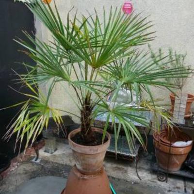 Foto plaatsen van tropische plant