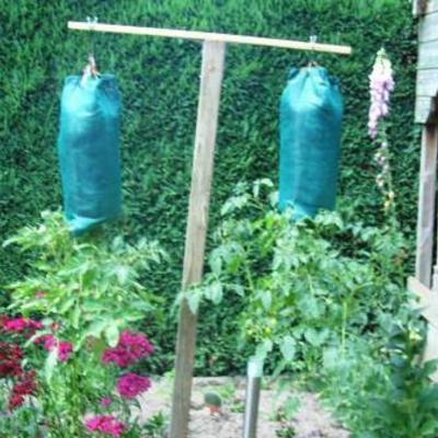Tomaten in zak gekweekt