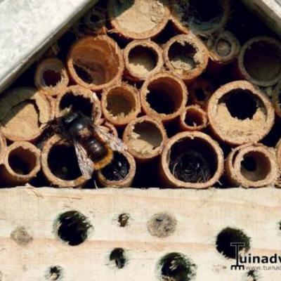 Metselbijen in t Stad