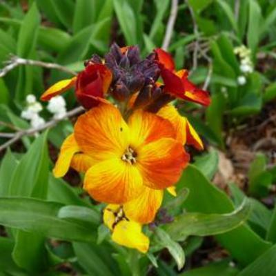 Wie helpt me aan de naam van dit leuk bloeiend onkruid