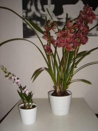 Tropische planten namen