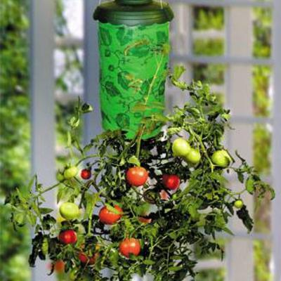 Tomaten onderste boven kweken