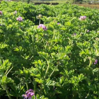 Ivm planten bewaren planten binnen laten overwinteren