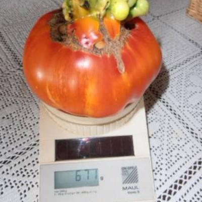 Speciaal tomaten creatuur