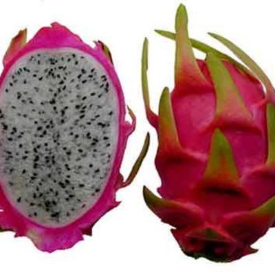 Waar is dragon fruit te koop for Nep fruit waar te koop