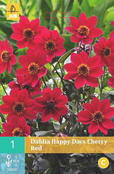 Dahlia Happy Days Cherry Red