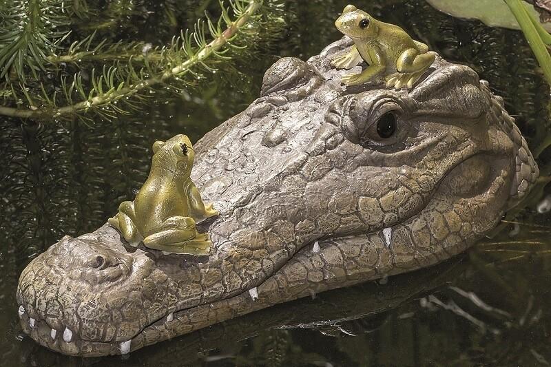 Drijvende krokodil met kikkers