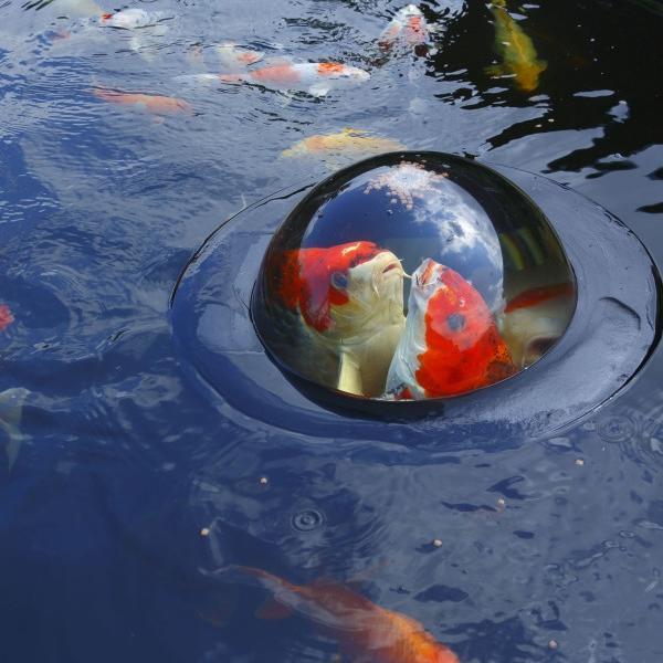 Drijvende visbeleving met lichte schade70 cm