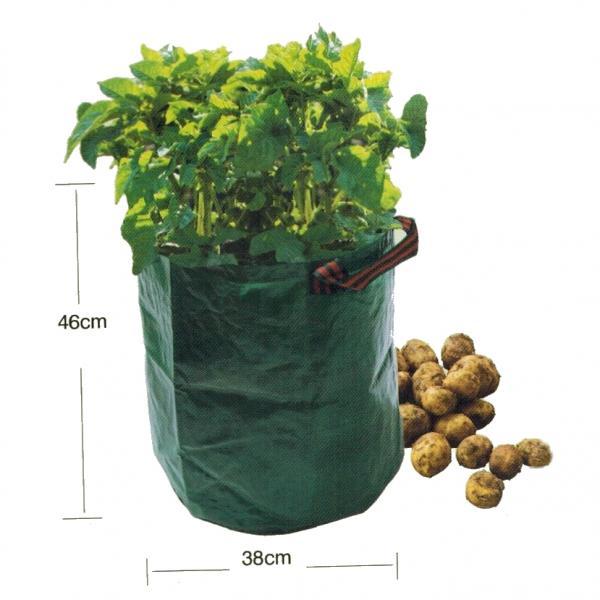 Stevige aardappel groeizak