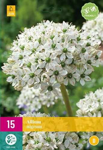 Allium nigrumsierui