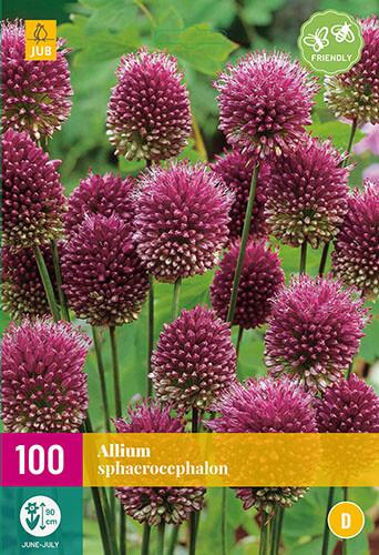 Allium sphaerocephalonsierui