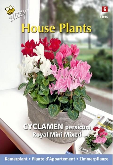 Alpenviool royal mini mixCyclamen persicum