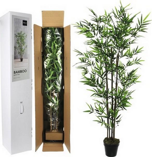 Bamboe in pot90 x 155 cm