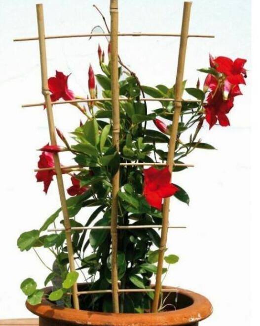 Bamboe ladder 45 x 110 cm