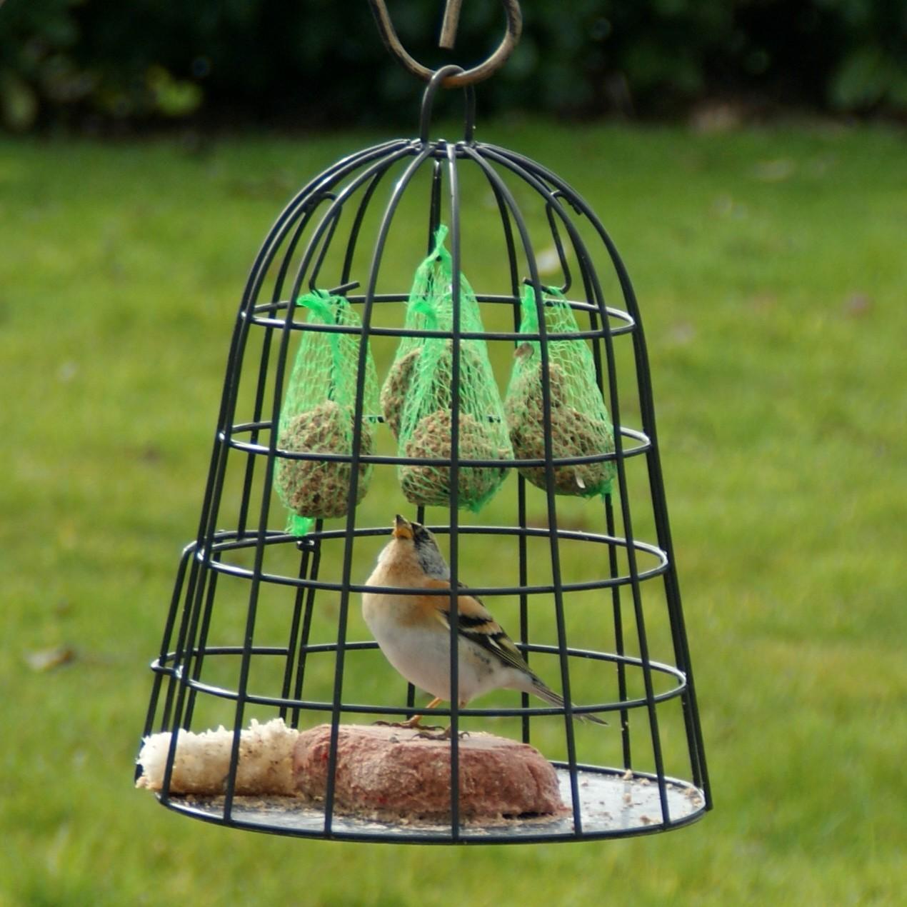 Beschermkooi voor vogelvoer