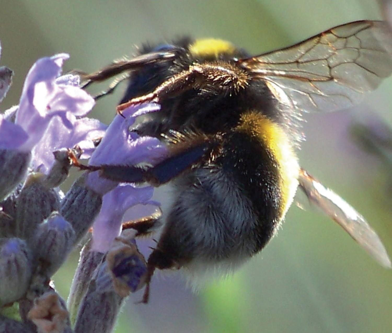 Bijen bloemenmengsel 8 g