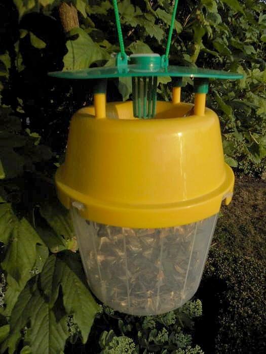 Buxusmotten vangbeker2 feromoon capsules