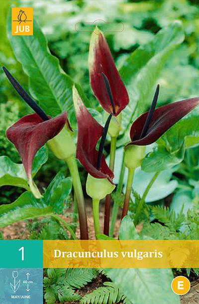 Dracunculus vulgarisdrakenwortel