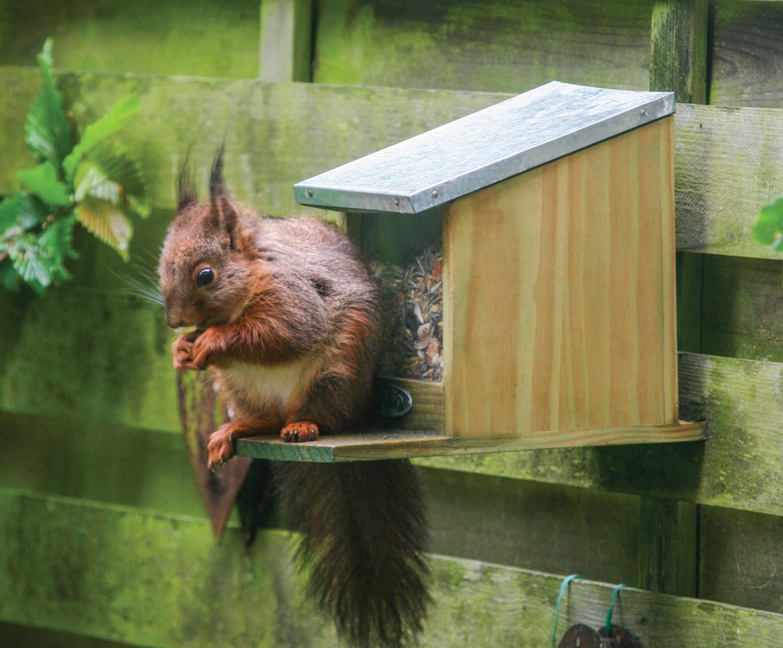 Best for birds eekhoorn voerderhuis