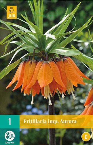 Fritillaria imperialis Aurora keizerskroon