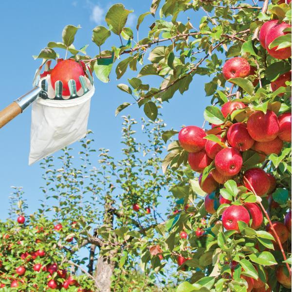 Fruitplukker14 cm